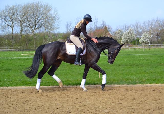 paardensport