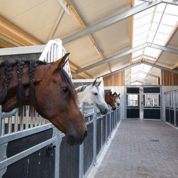 Paarden Hotel